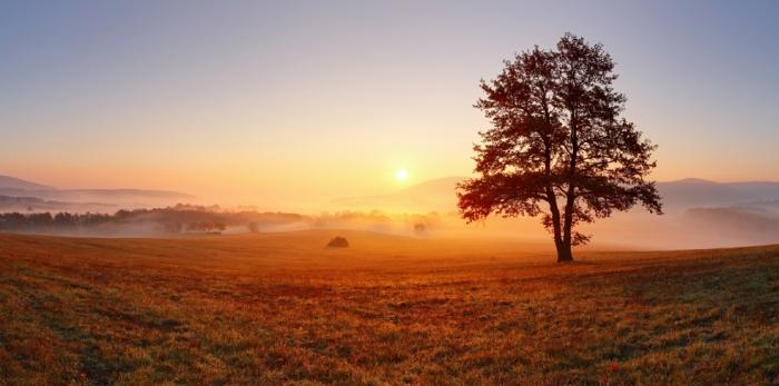 Herbststimmung Laubbaum aufgehende Sonne Frühnebel Wiese im Herbst